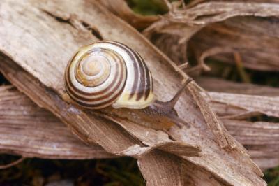 Comment faire une spirale de Fibonacci dans Photoshop