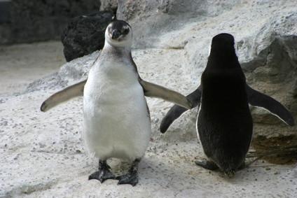 Imprimantes HP compatibles Linux