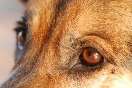 Comment faire pour supprimer Pet Eye à partir d'une photo